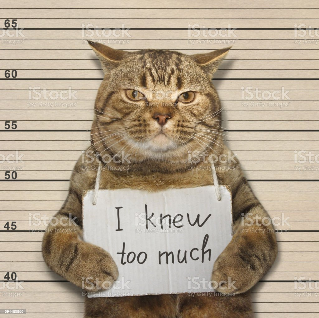 Bad cat knew too much stock photo