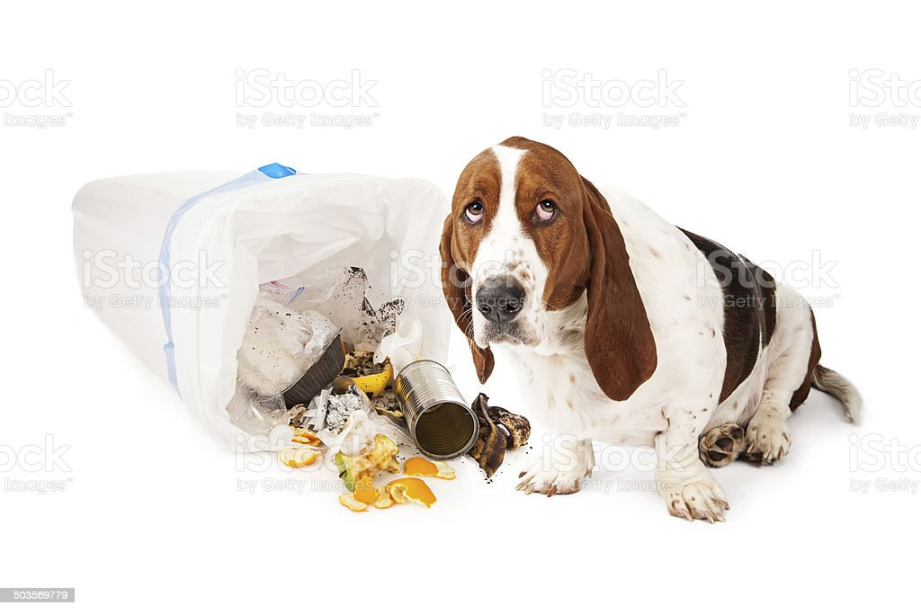 Bad Dog Getting Into Garbage stock photo