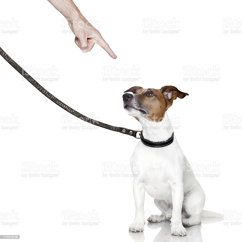 bad dog looking up royalty-free stock photo