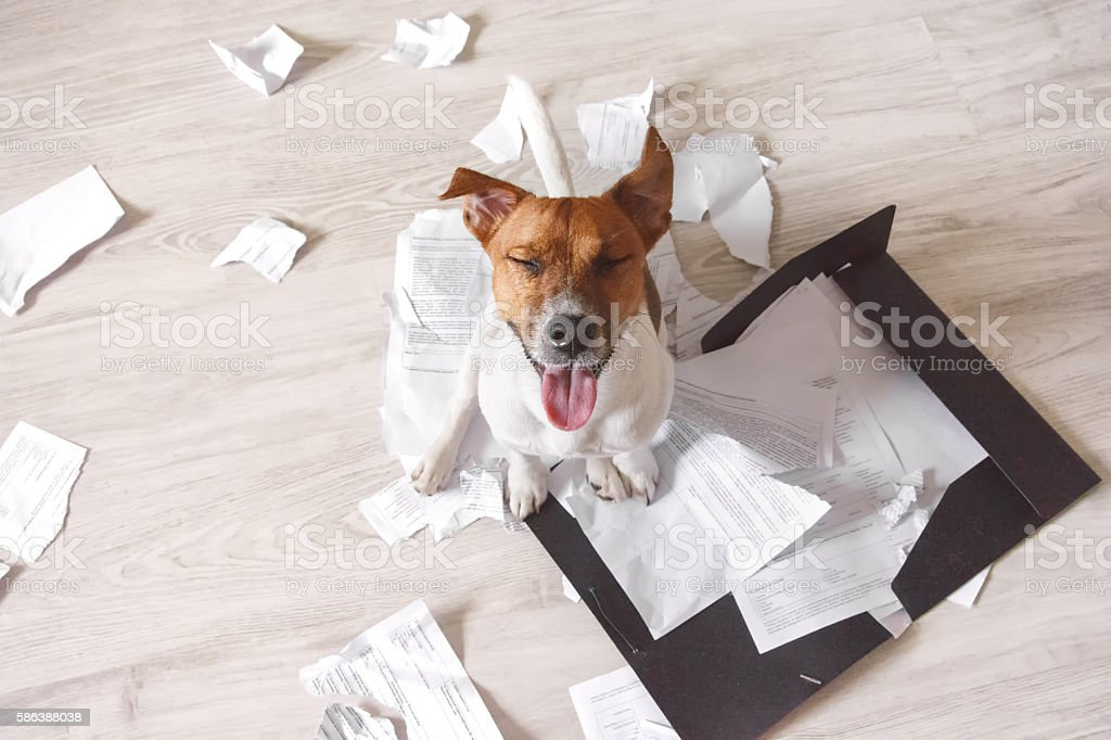 Bad dog sitting on the torn pieces of documents stock photo