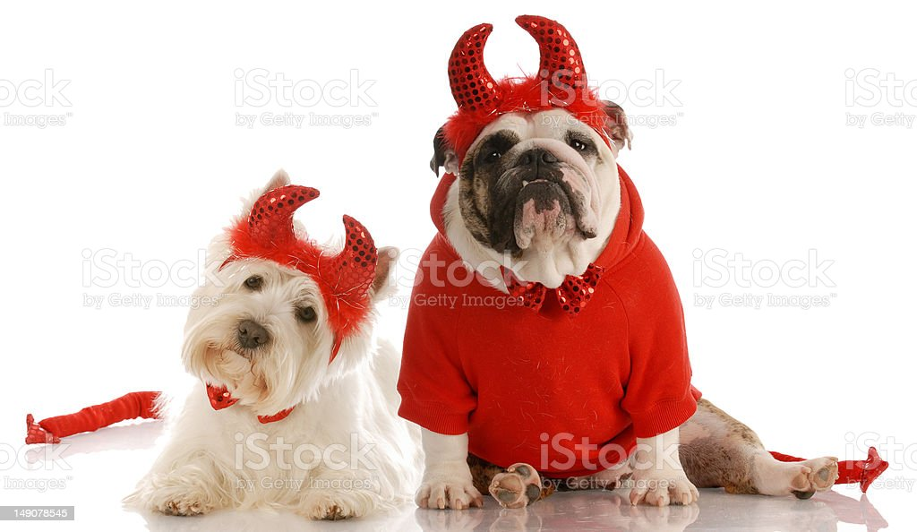 bad dogs stock photo