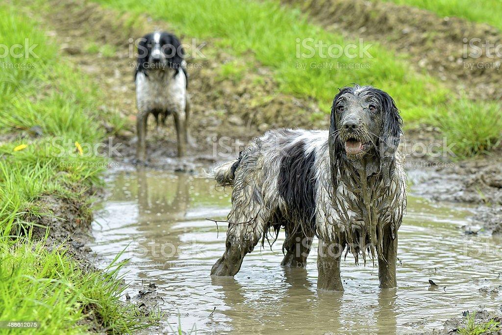 Bad dogs! stock photo
