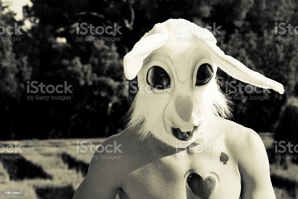 bad rabbit stock photo
