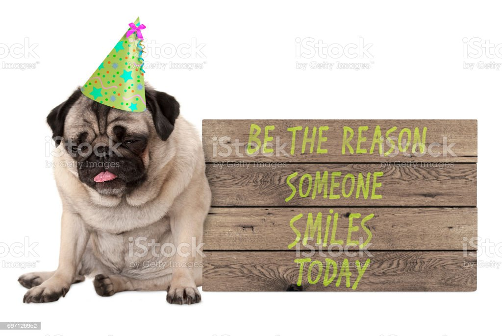 bad tempered pug puppy dog with wooden sign with text be the reason someone smiles today stock photo