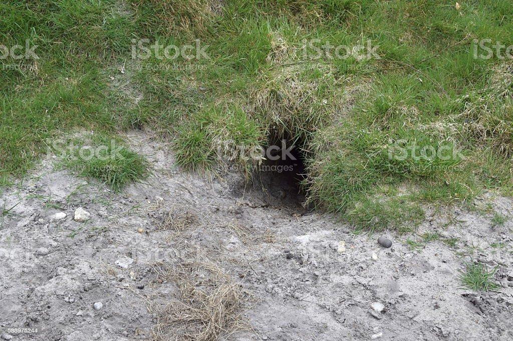 Badger sett entrance stock photo