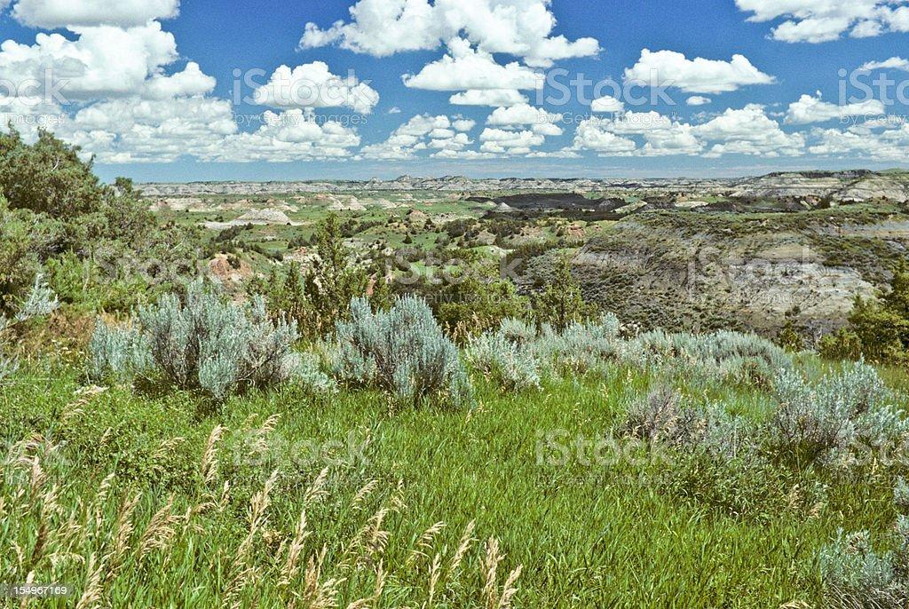 Badland Meadow, Grass and Sagebrush stock photo