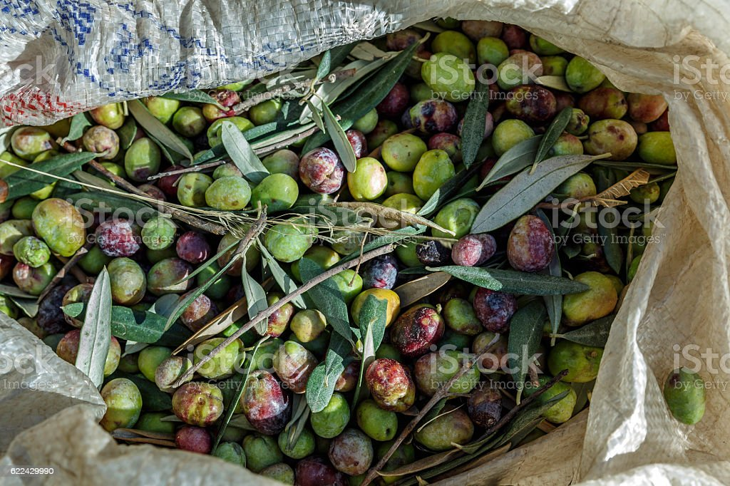 bag of olives stock photo