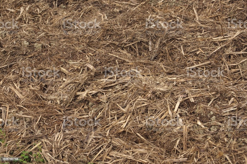 Bagasse stock photo