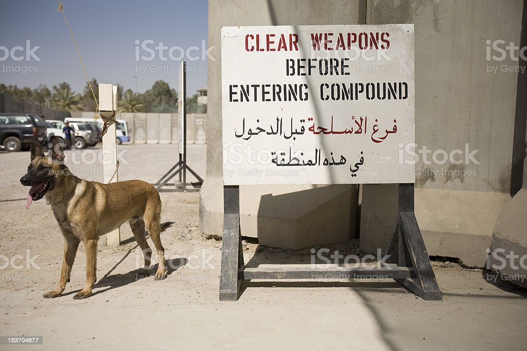 Baghdad Guard Dog at Check Point stock photo