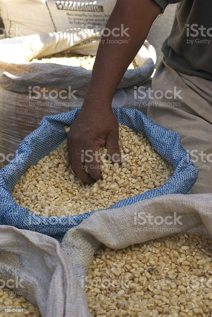 Bags of Corn for sale, market day. stock photo