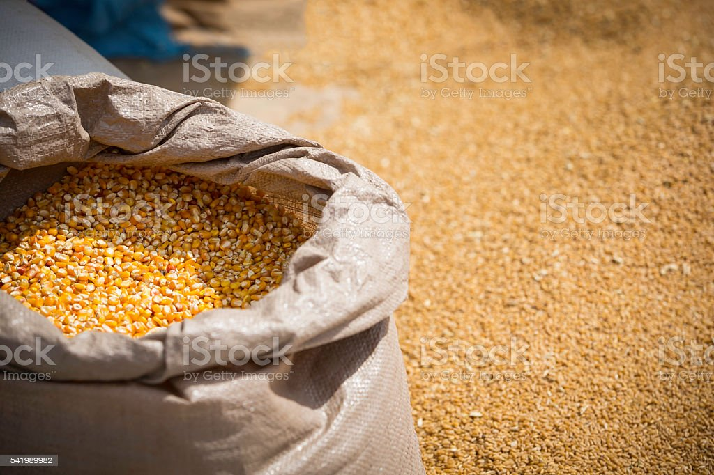 bags of feed stock photo