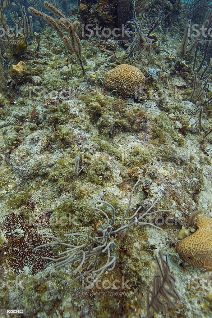 Bahamian coral reef stock photo