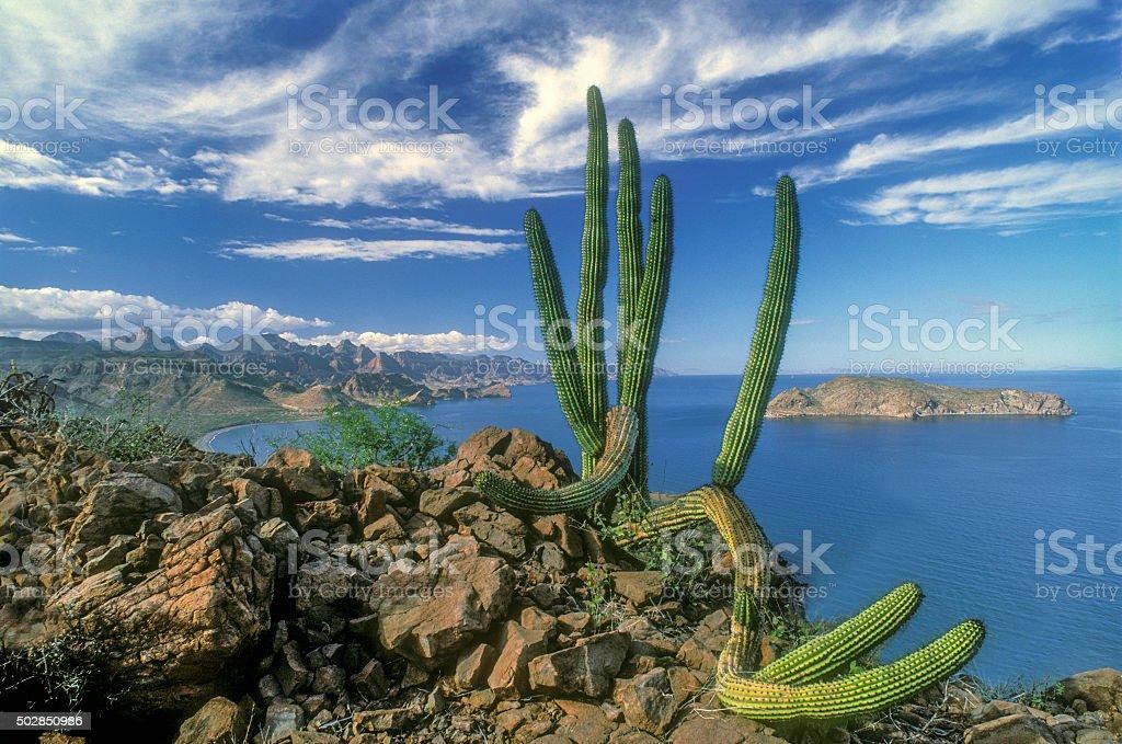 Baja coastal beauty stock photo
