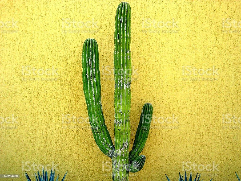 Baja Foliage royalty-free stock photo