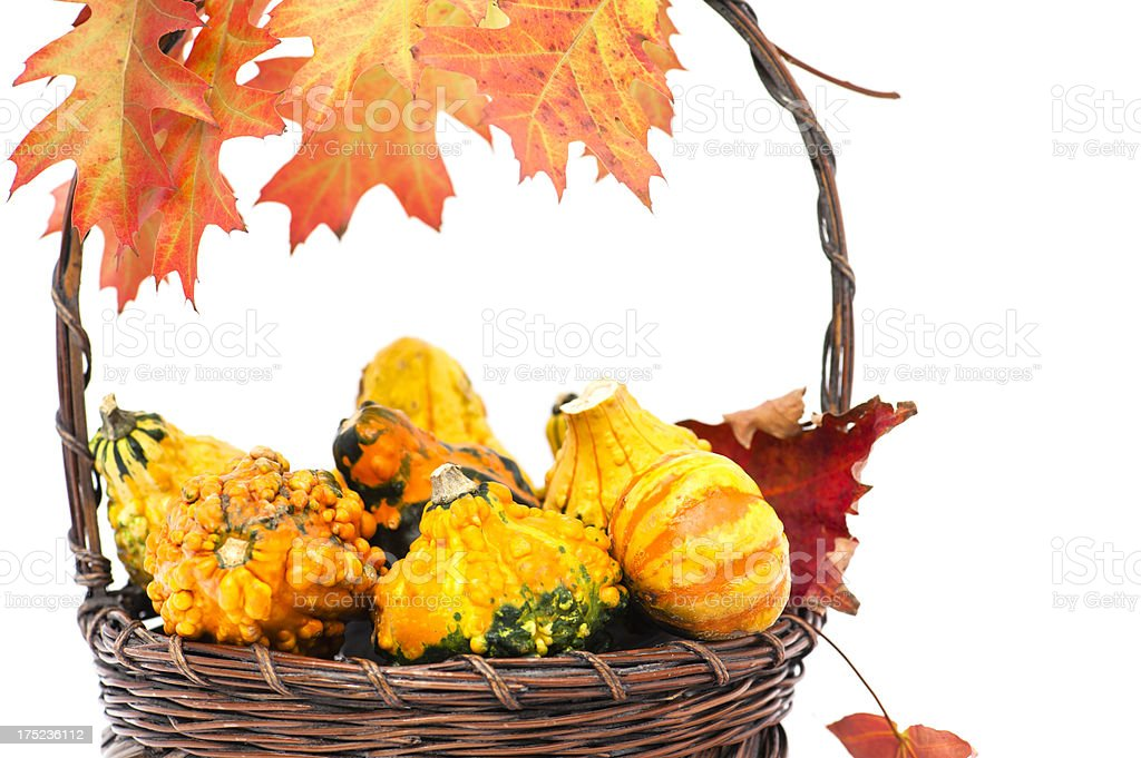 Bakset of Gourds royalty-free stock photo