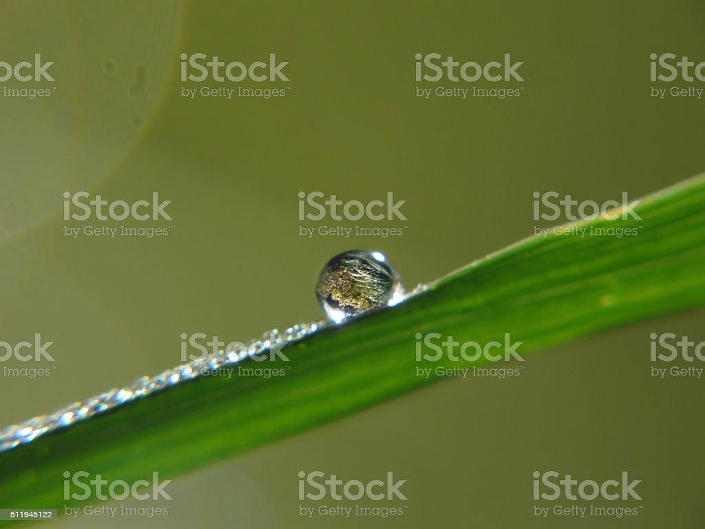 Balance on Bamboo stock photo