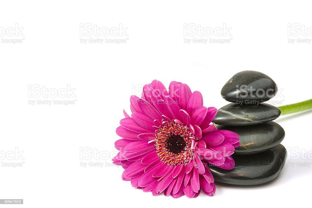 Balancing pebbles and daisy flower stock photo