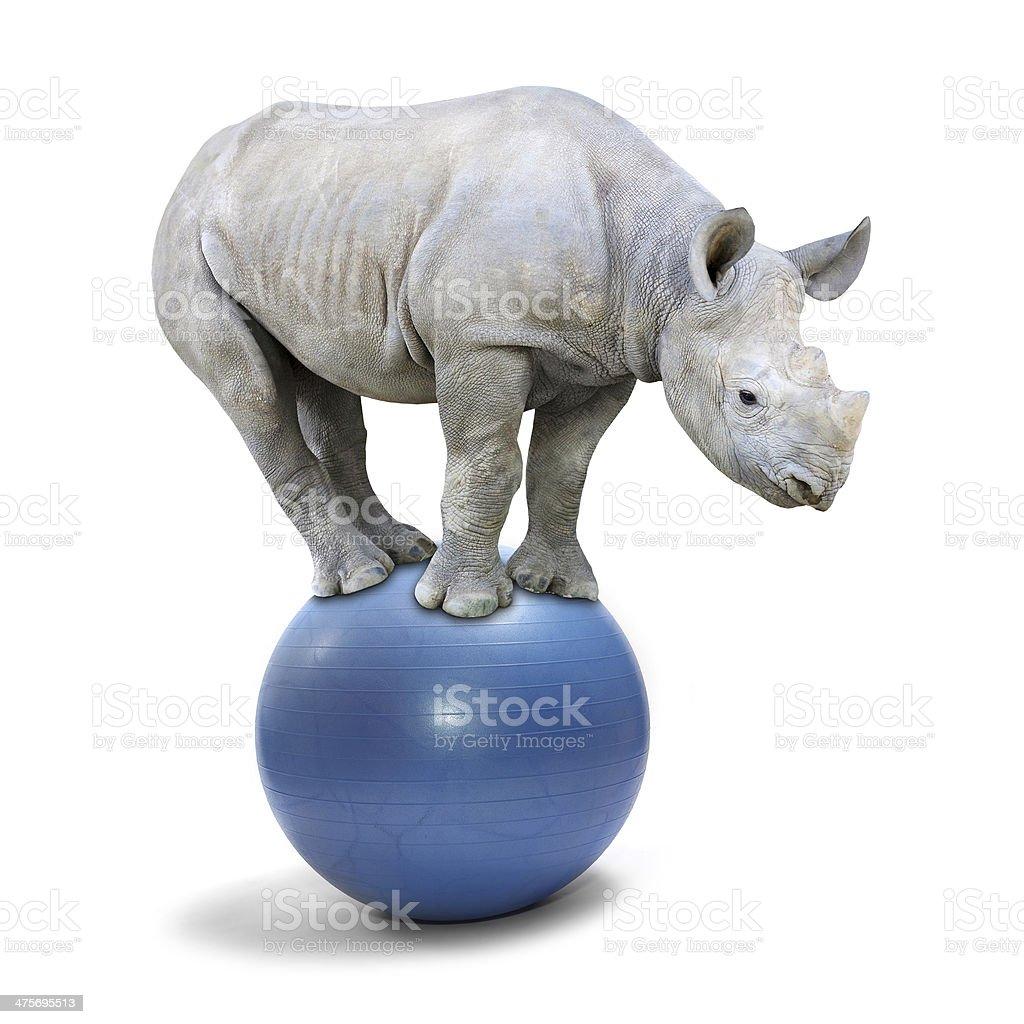 Balancing Rhino. stock photo
