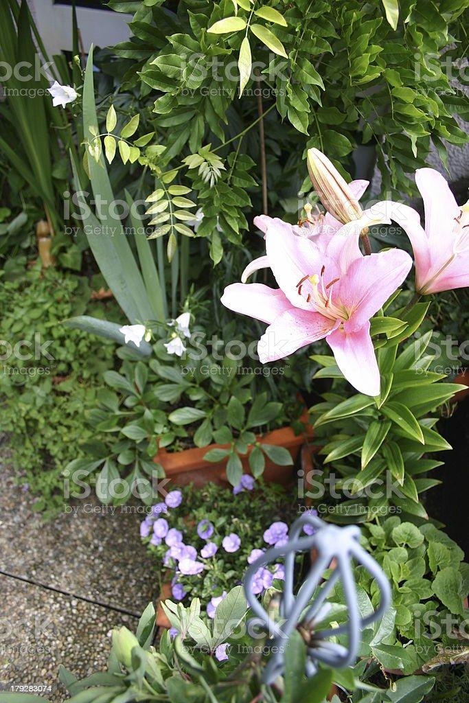 Balcony flowers royalty-free stock photo