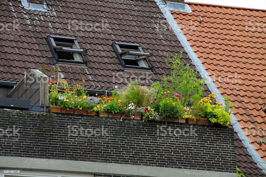 Balcony greenery stock photo