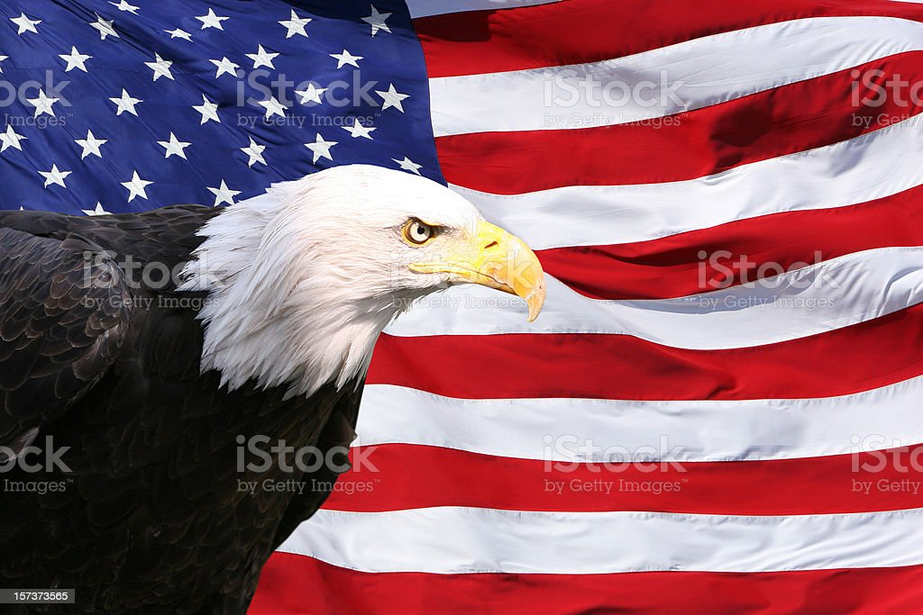 Bald Eagle American Flag royalty-free stock photo