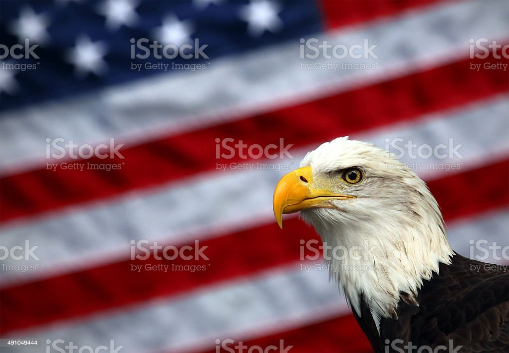 Bald Eagle and American Flag stock photo