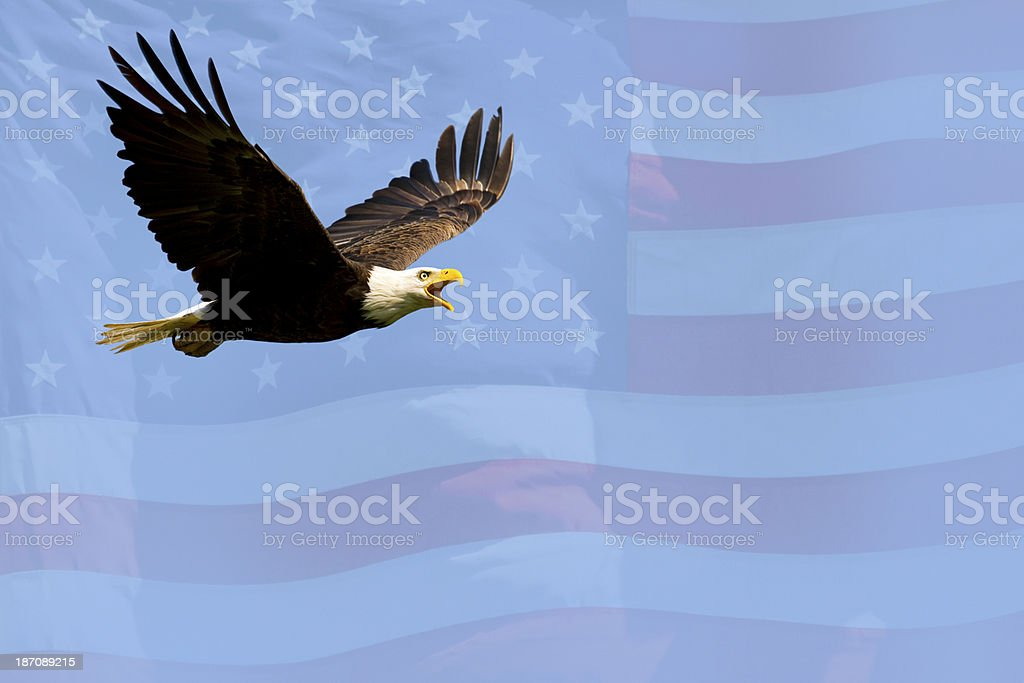 Bald Eagle Flying in Blue Sky With American Flag Background stock photo