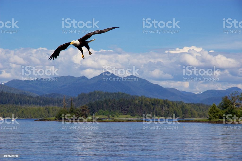 Bald eagle flying over Pacific Ocean near Prince Rupert, Canada stock photo