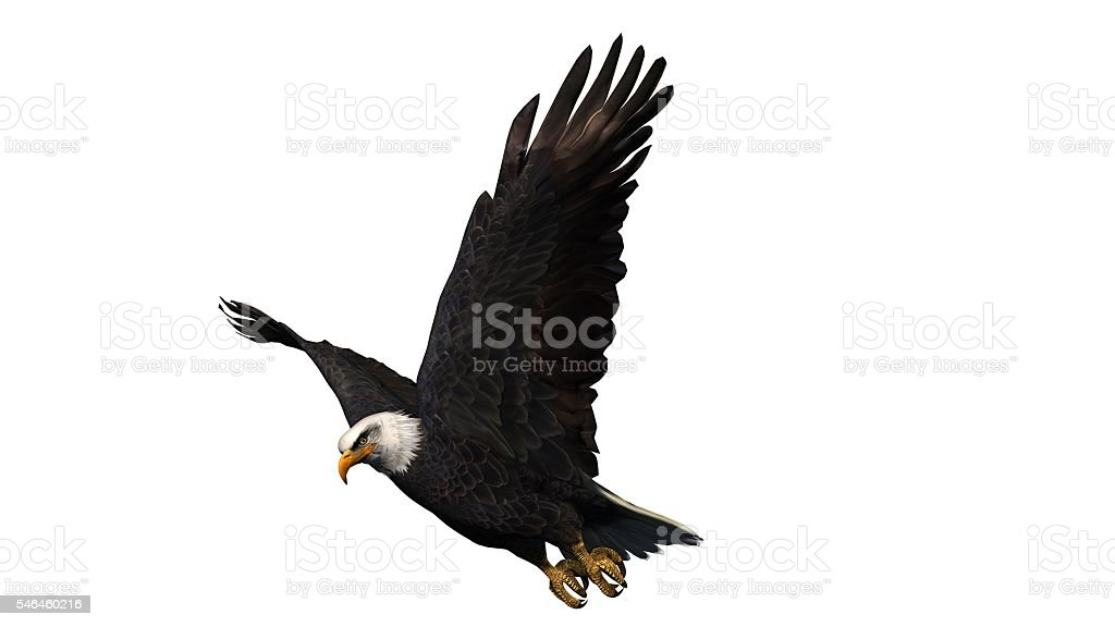 Bald Eagle in fly isolated on white background stock photo