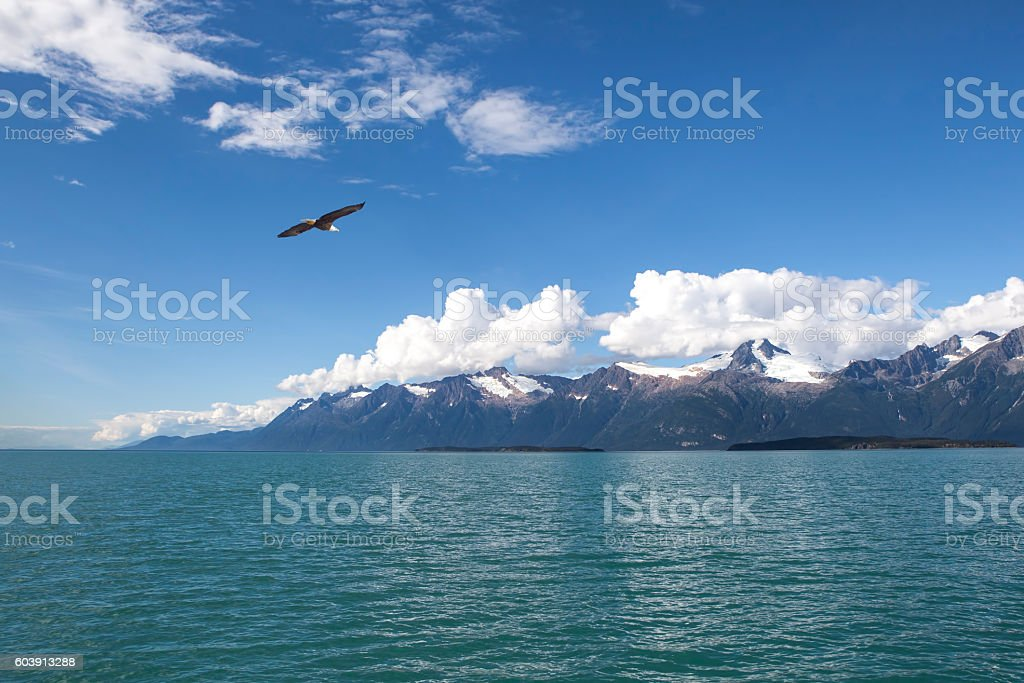 Bald Eagle in Southeast Alaska stock photo