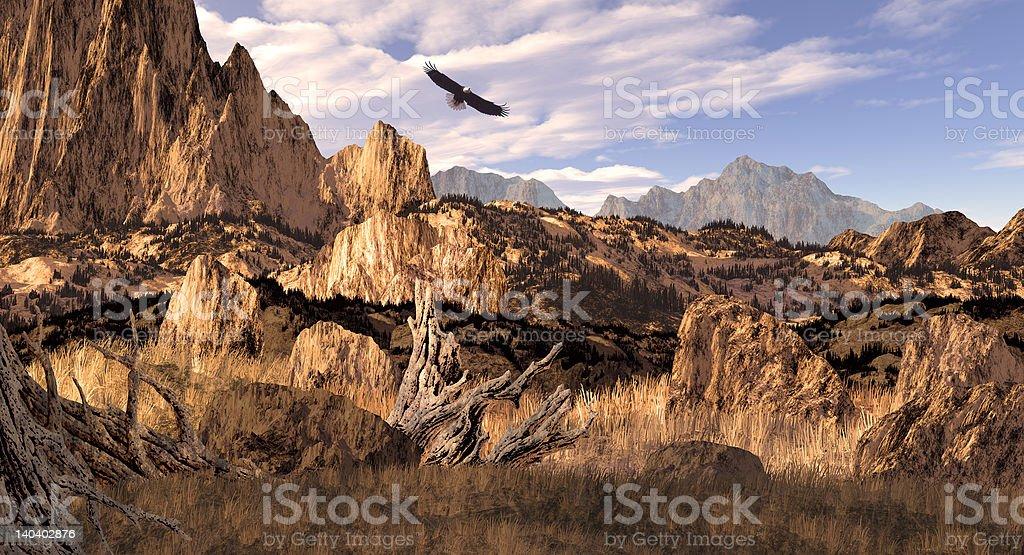 Bald Eagle in the Colorado Rockies stock photo