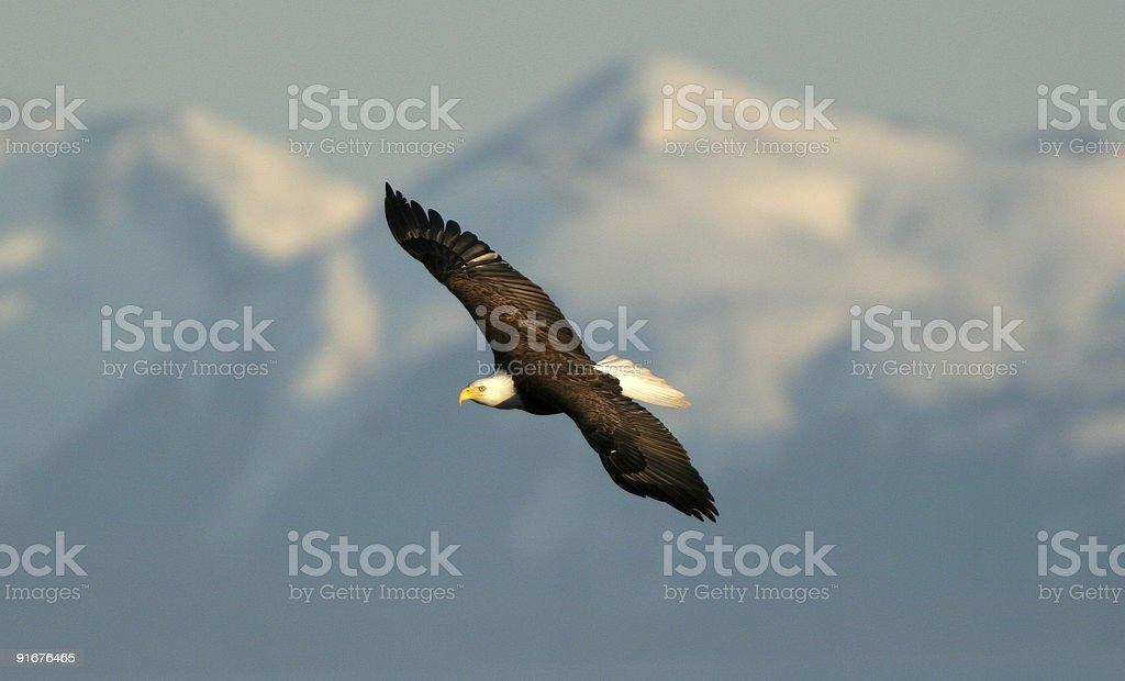 Bald Eagle & Mountains stock photo