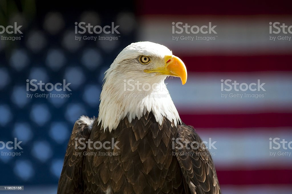 Bald Eagle Profile in front of USA Flag royalty-free stock photo