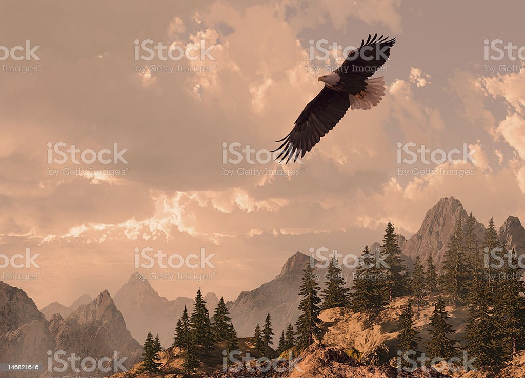 Bald Eagle Soaring in the High Country stock photo