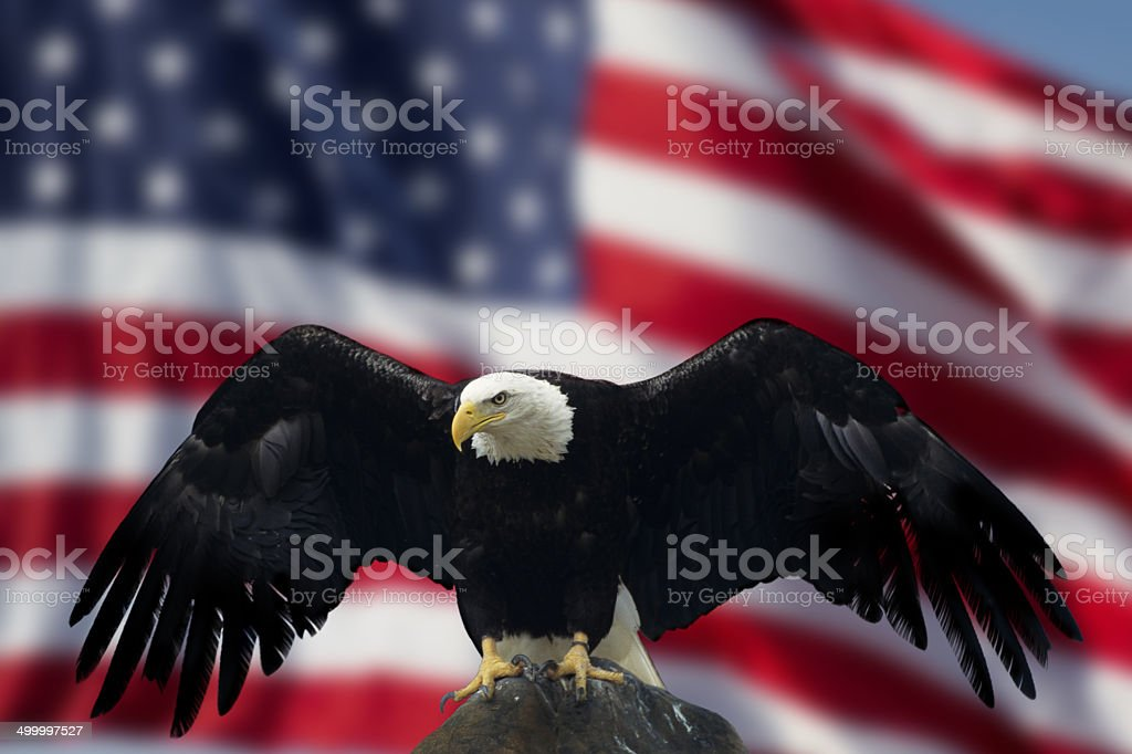 Bald Eagle with Flag United States of America stock photo