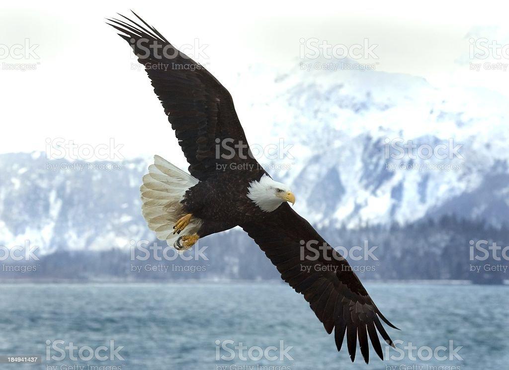 Bald Eagle with Mountain Backdrop - Alaska royalty-free stock photo