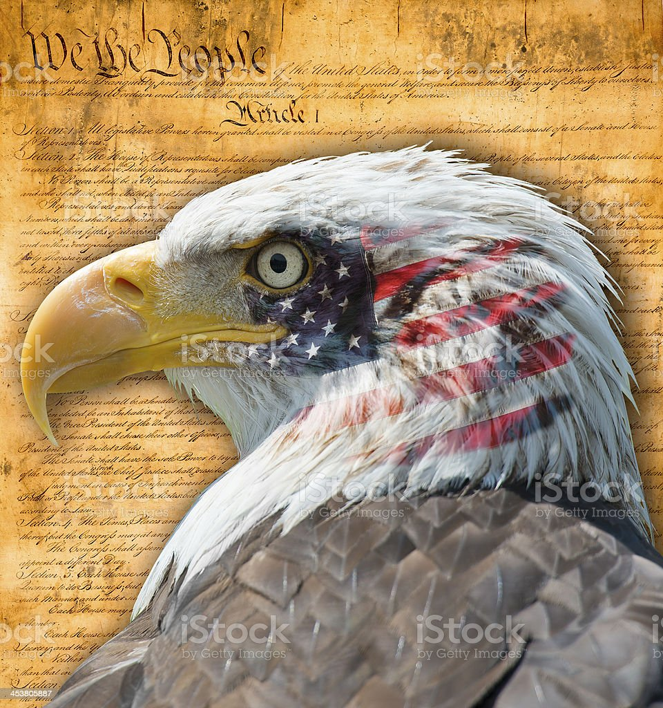Bald eagle with superimposed US flag and US constitution stock photo