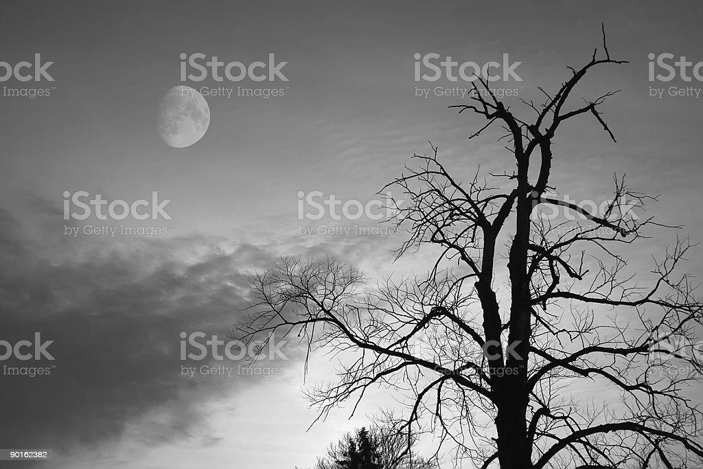 Bald tree royalty-free stock photo