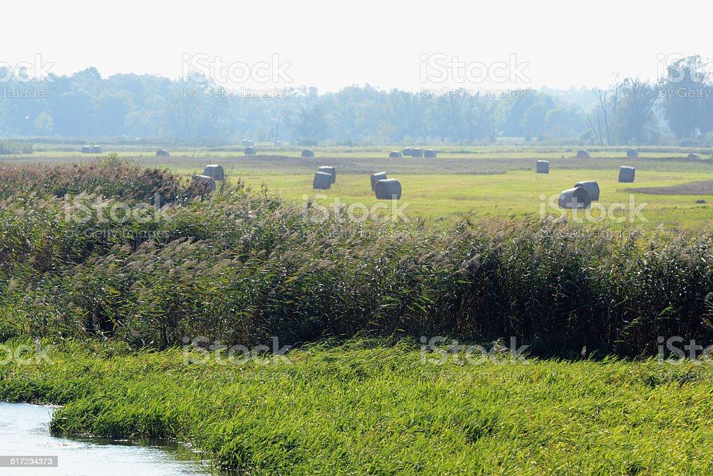 bale  along Havel River landscape (Brandenburg) stock photo