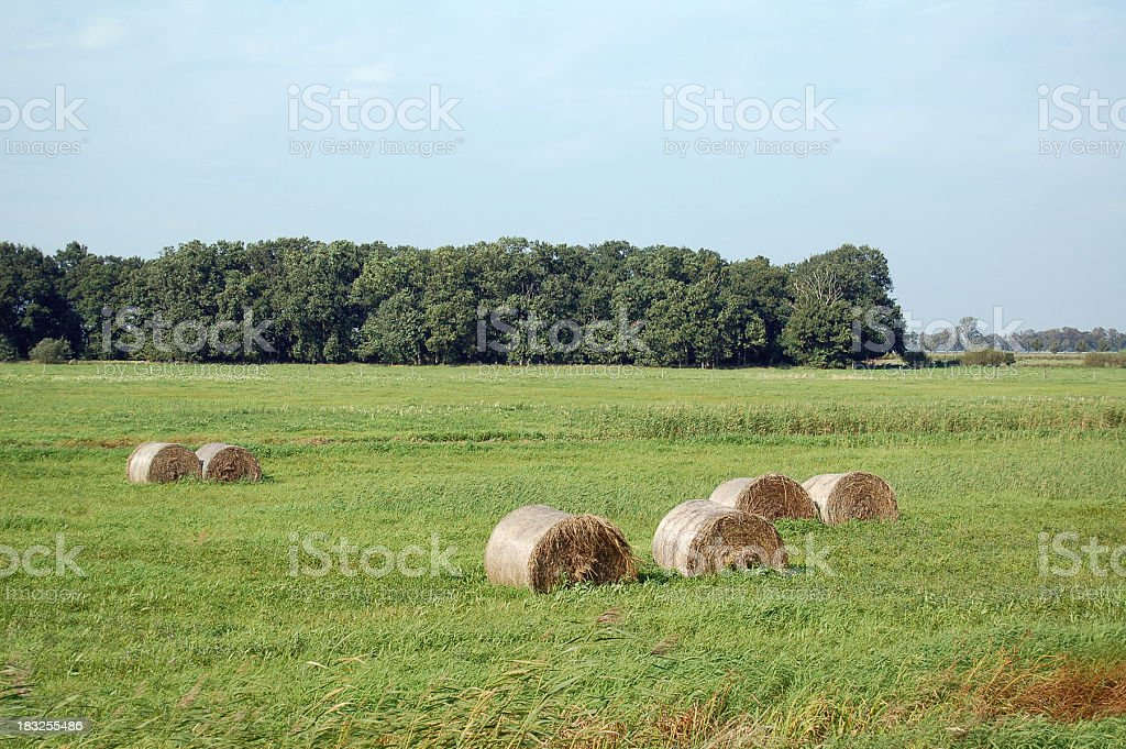 bale at a Meadow landscape on Havel (Brandenburg) stock photo