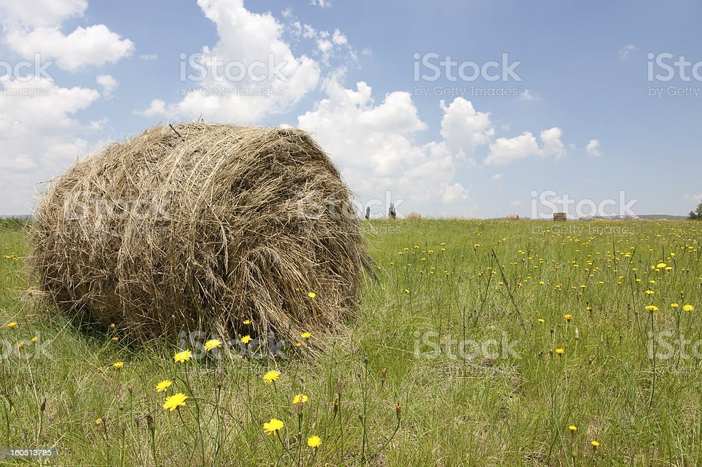 Bale in a field with dandelions on Free State farm stock photo