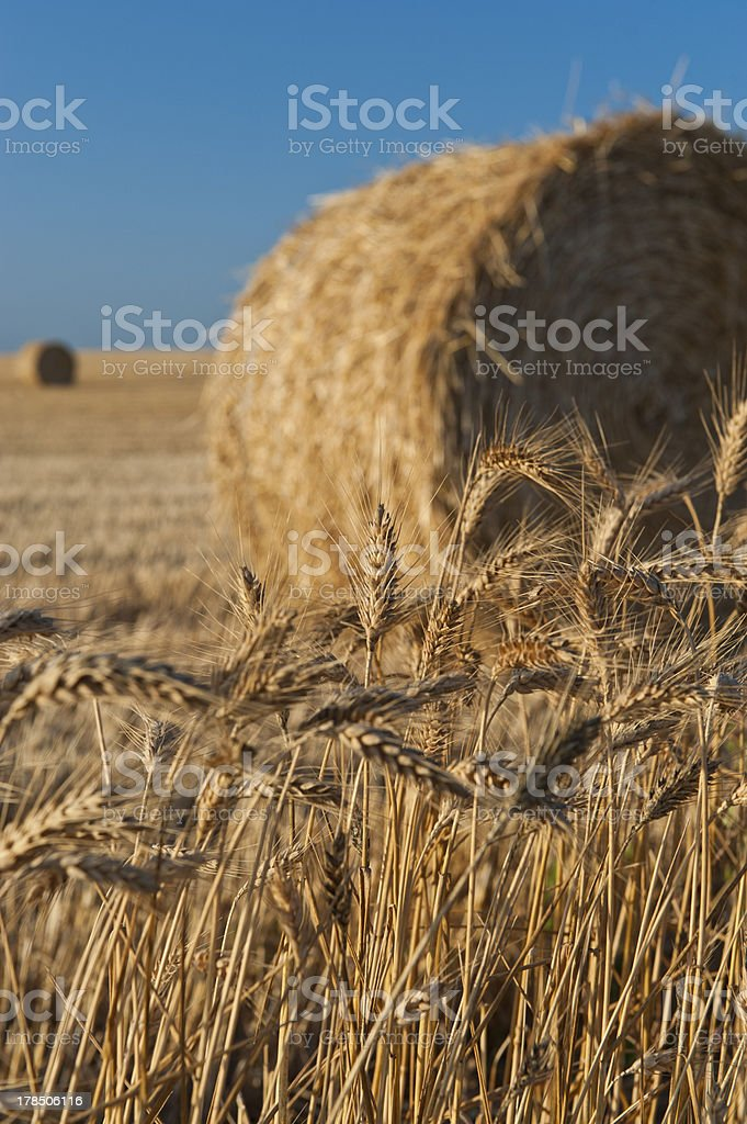 Bale of straw royalty-free stock photo