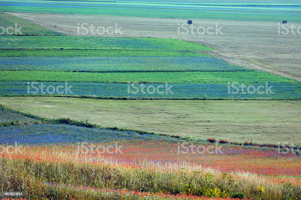 Bale on Beautiful Flower Fields, Castelluccio di Norcia, Italy, Europe stock photo