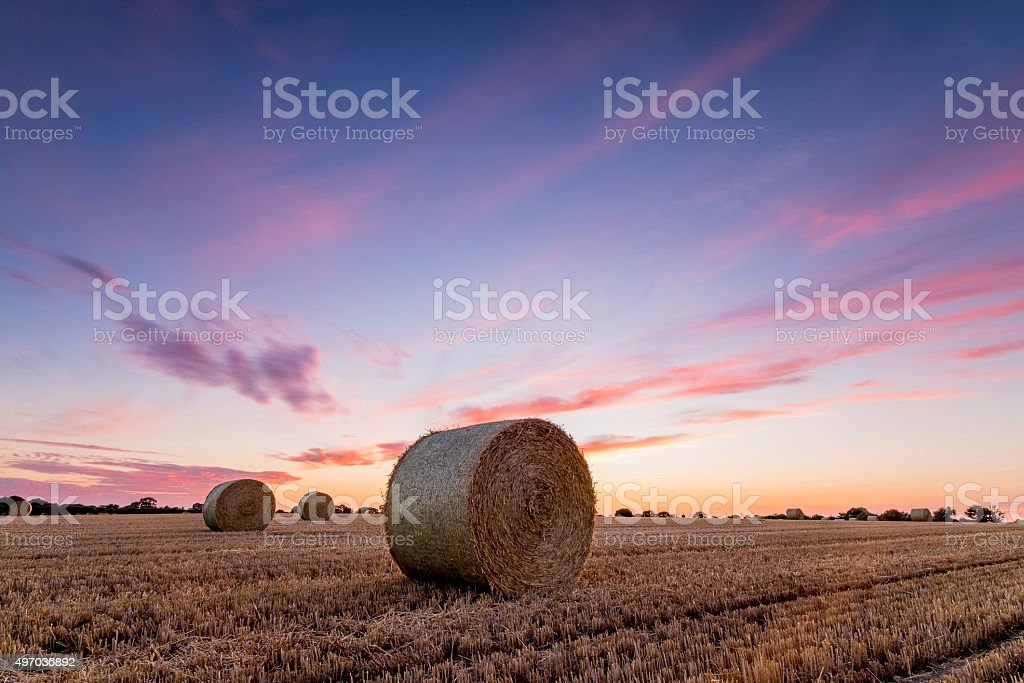 Bales at Sunset stock photo