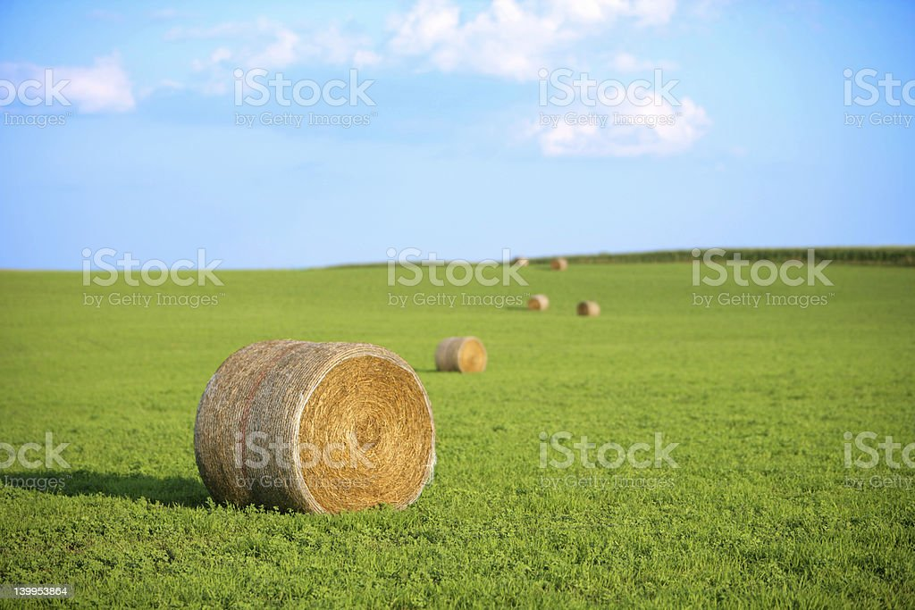 bales of hay in a row royalty-free stock photo