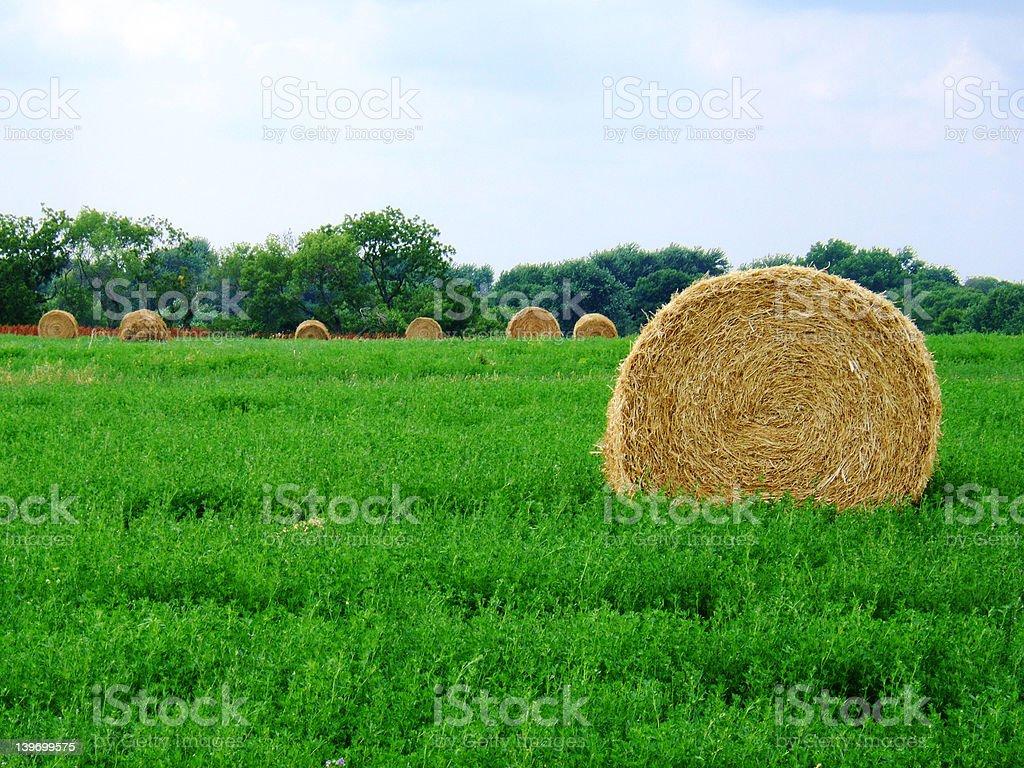 Bales of hay in farmer's field. stock photo