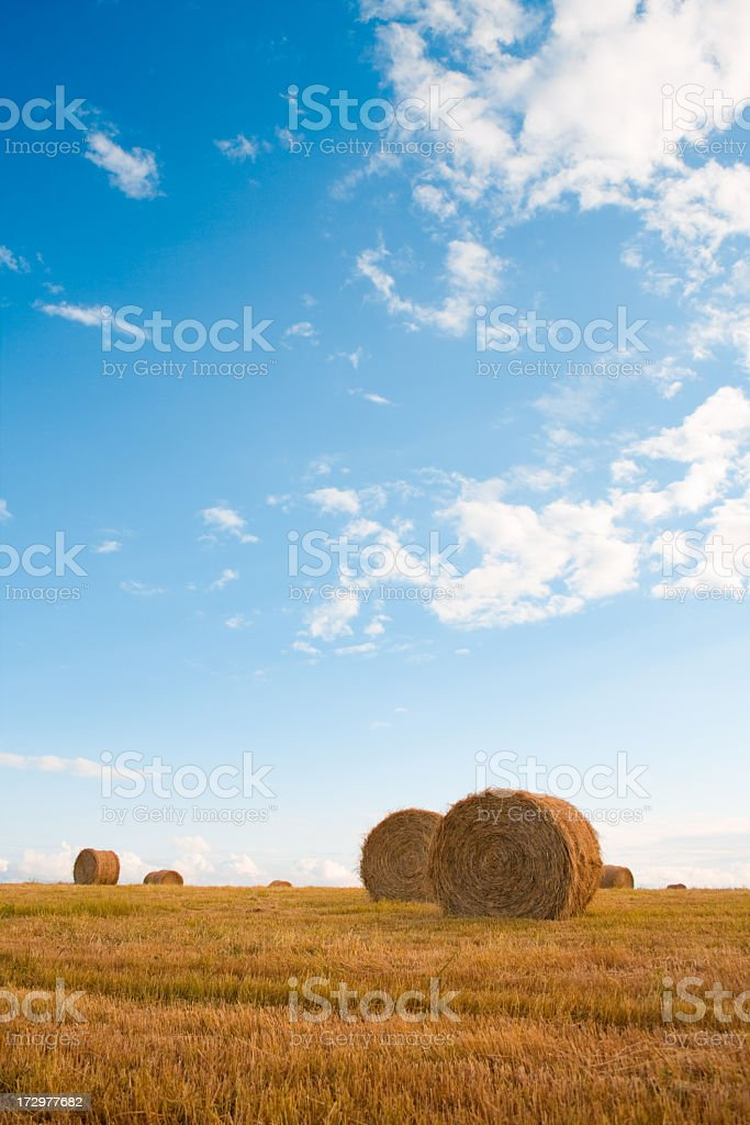 Bales of Hay in Field royalty-free stock photo