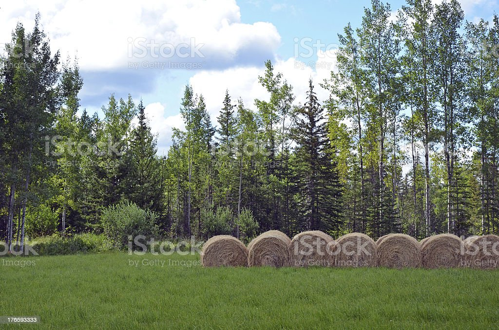 Bales of hay in meadow royalty-free stock photo