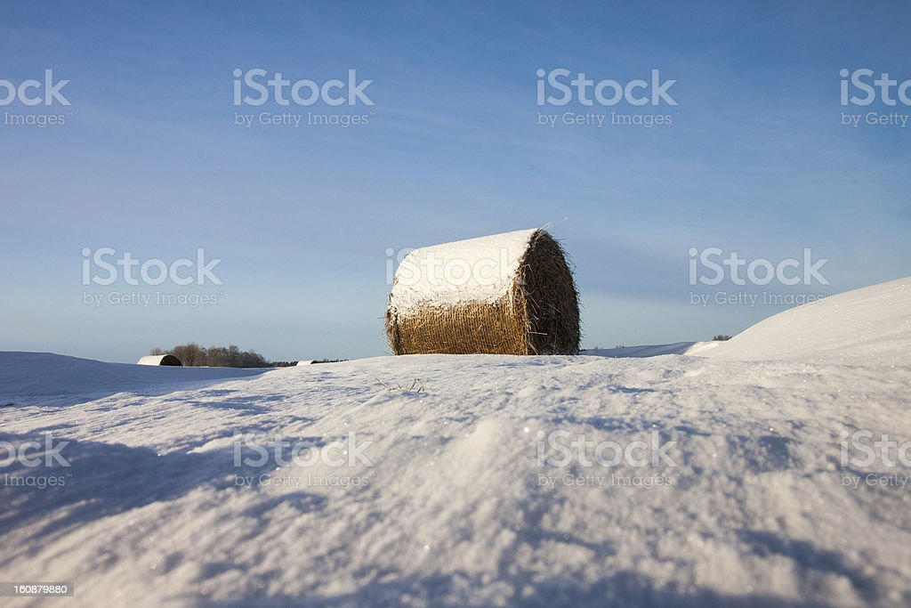 Bales of hay laying in snow on field royalty-free stock photo
