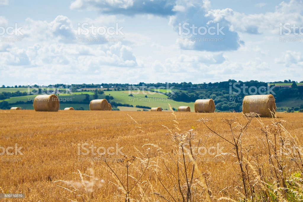 Bales of hay on a harvested field. stock photo